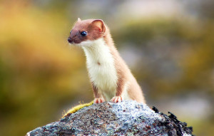 weasel-talk about early Christianity and the Trinity