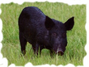 HoG: The Most Divine Content-Fallacy, and 'Is the Divine Word Practical Knowledge?' (Scott)